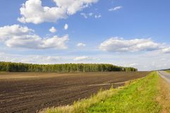Black field with trees far away. Cultivated area. Agriculture. Bright blue sky and green grass.  royalty free stock images