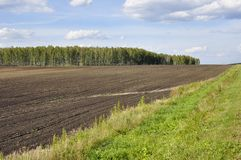 Black field with trees far away. Cultivated area. Agriculture. Bright blue sky and green grass.  royalty free stock image
