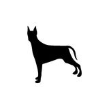 Black figure doberman pinscher dog animal. Illustration Stock Photo