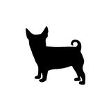 Black figure small dog animal Royalty Free Stock Images