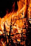 Black Firewoods in fire wirh read coal Royalty Free Stock Photo