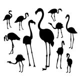 Black flamingo silhouettes on white background  Royalty Free Stock Image