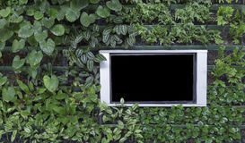 Black flat screen monitor on green background. Black flat screen monitor with silver aluminum frame on green plant wall background Stock Images
