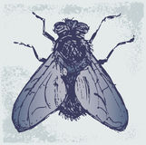 Black flies. Grunge style. Vector illustration Stock Photo