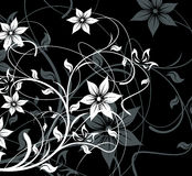 Black floral background. For design (vector Stock Photos