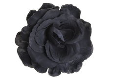 Black flower head rose Royalty Free Stock Photos
