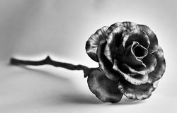black flower Royalty Free Stock Photography