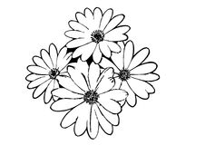 Black Flower Outline Stock Photo