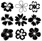 Black flowers Stock Images