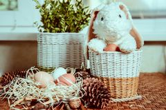 Bunny near basket with eggs. Black fluffy bunny near basket with eggs stock photos