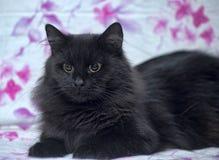 Black fluffy cat Royalty Free Stock Image