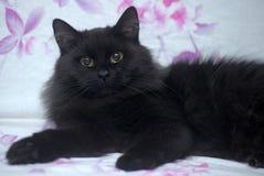 Black fluffy cat Royalty Free Stock Photo