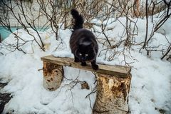 Black fluffy cat on bench ready to jump.  Royalty Free Stock Images