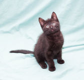 Black fluffy kitten sits on green background Stock Photos