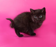 Black fluffy kitten sitting on pink Stock Photos