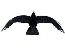 Black Flying Crow silhouette 300 dpi Stock Photo