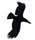 Black Flying Raven Silhouette 300 dpi Stock Photo