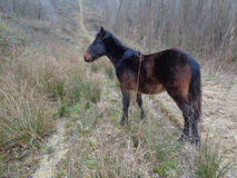 Black foal on forest road. Black foal on the road near the forest Stock Photo