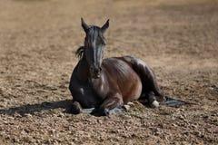 Black foal Stock Photo