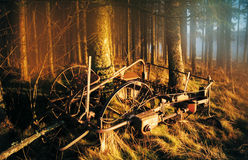 Black Forest royalty free stock photos