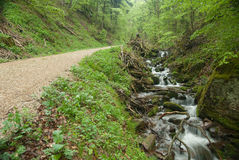Black Forest. Mountain Torrent in the Black Forest in Germany Royalty Free Stock Photography
