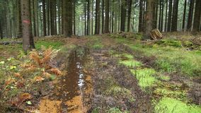 Black Forest royalty free stock images