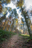 Black Forest at autumn, Germany Stock Photography