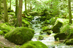 Black Forest Brook Royalty Free Stock Images
