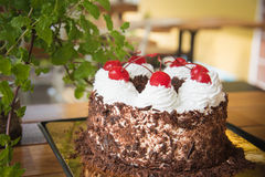 Black forest cake decorated. With whipped cream and cherries Stock Images