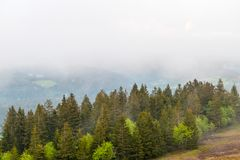 Black Forest Fog Landscape Trees from above royalty free stock images
