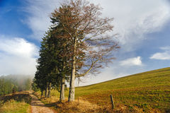Black Forest footpath Stock Image