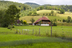 Black Forest in Germany Stock Photography