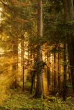 Black Forest Royalty Free Stock Photography