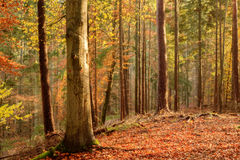 Black Forest Stock Photography