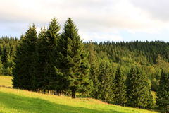 Black forest, Germany Stock Photography