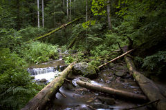 Black forest germany Stock Photos