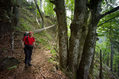 Black Forest hiker Stock Photo