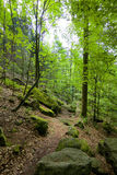 Black Forest hiking trail Royalty Free Stock Image