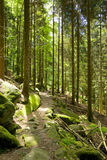 Black Forest hiking trail Royalty Free Stock Images