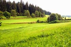 Black forest landscape Stock Images