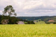 Black forest landscape Stock Photos