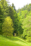 Black Forest Meadows and Hills Stock Photo