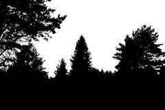 Black forest silhouette. Isolated on white background. Vector illustration for your design Royalty Free Stock Photo