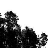 Black forest silhouette. Isolated on white background. Vector illustration for your design Royalty Free Stock Image