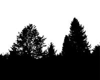 Black forest silhouette. Isolated on white background. Vector illustration for your design Royalty Free Stock Images
