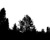 Black forest silhouette. Isolated on white background. Vector illustration for your design Stock Images