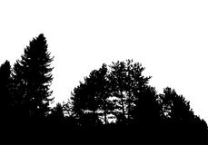 Black forest silhouette. Isolated on white background. Vector. Illustration for your design Royalty Free Stock Photos