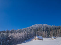 Black Forest at Wintertime Stock Image