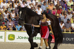 Black Forest workhorse, Marbach Stallion Parade Stock Photo