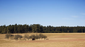 Black forrest. A field with some trees and the black forrest behind Royalty Free Stock Images